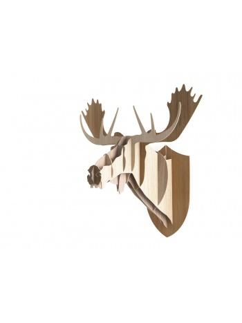 Moose Random trophy